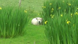 KeepTurningLeft Scotland .Still013