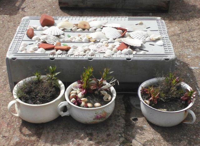 S1100049 potty garden