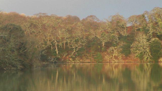 S1730004 trees