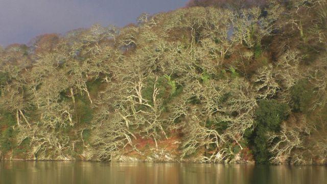 S1730007 trees