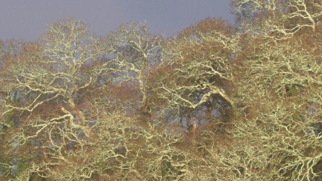 S1730008 trees