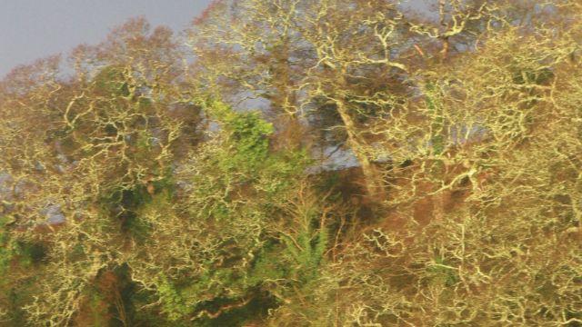 S1730009 trees