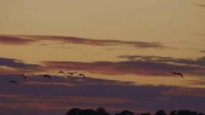 evening birds