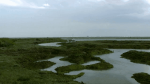 marshes canvas